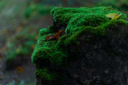 green moss on gravestone in cemetery after rain