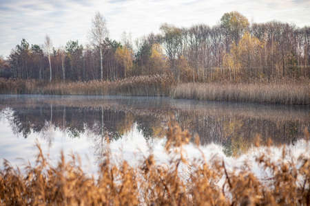 Picture of a slightly misty lake and autumn trees almost without leaves in morning November Latvia. Beautiful reflection of trees and reeds in absolutely calm water. 版權商用圖片