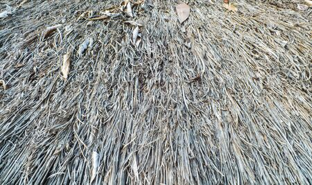 thatch: very old thatch roof