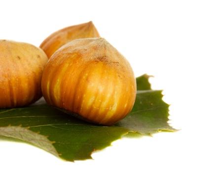 hazel nut: Hazel nut over white Stock Photo