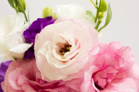 Banch kwiaty eustoma na białym tle
