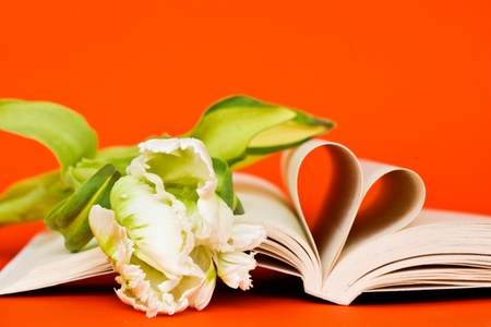 open book with heart of pages and flower on orange background photo