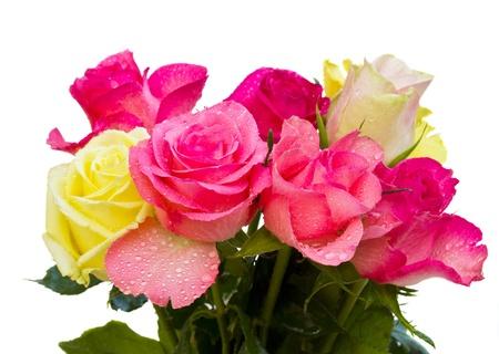 Strauß Rosen auf weißem Hintergrund Standard-Bild