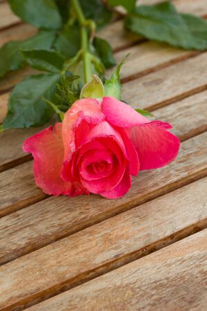 bosom: one pink rose laying  on wooden table