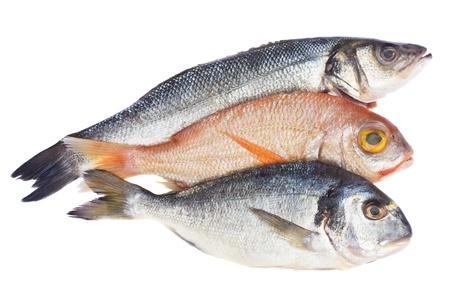 raw fish (gilt head, sea bass and sama) isolated on white Stock Photo - 11830621