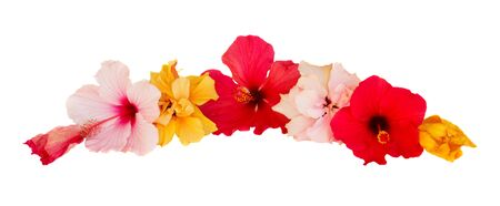 border of multicolored  hibiscus flowers isolated on white background photo