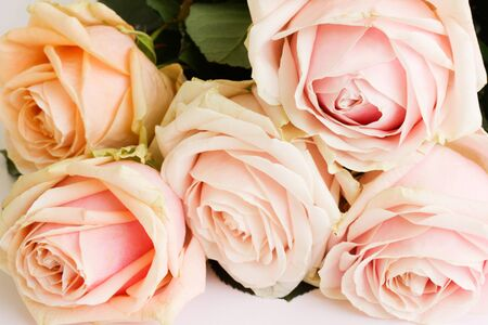 bouquet of roses photo