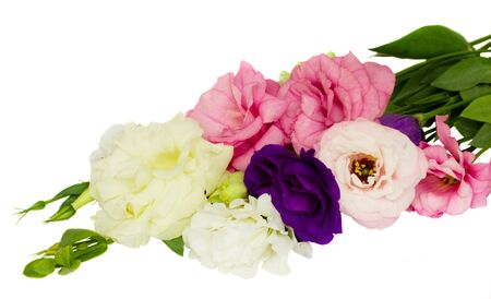 multicolored, eustoma flowers isolated on white background photo
