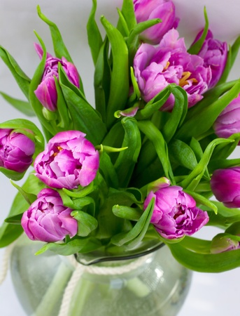 bouquet of beutiful bloming double purple tulips photo