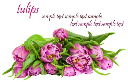 bunch of purple tulips isolated on white background photo