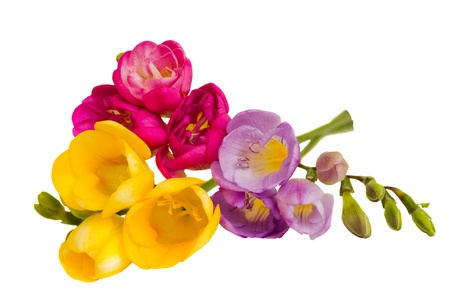 fresh freesias bouquet isolated on white background photo