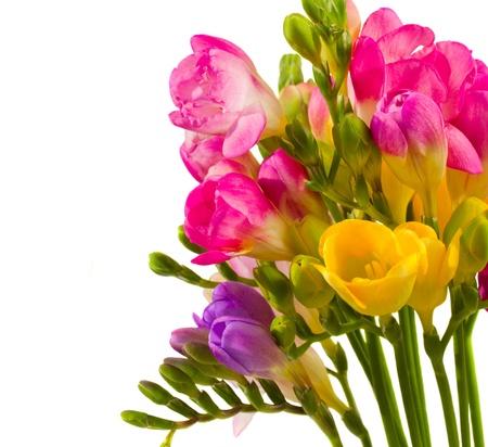 freesia: vibrant freesias bouquet isolated on white background