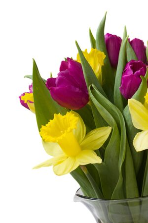 bouquet of purple tulips and yellow daffodils   photo