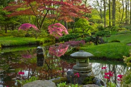 japanese maple tree: Japanese garden in spring, Den Haag, Holland Stock Photo