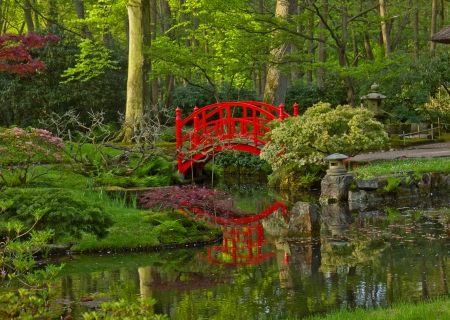 japanese maples: Japanese garden with red bridge, Den Haag, Holland Stock Photo