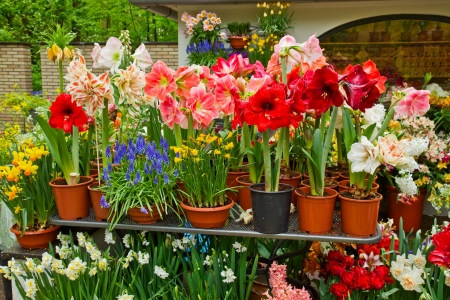 florists: variety of flowers in pots on display in shop