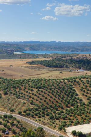 landscape with olives trees of Andalusia, Spain photo