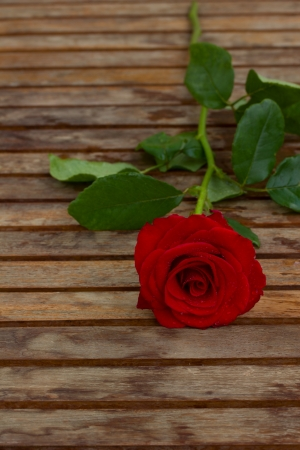 one perfect red rose in water droplets laying  on wooden table photo