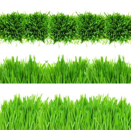sample of green grass borders isolated on white background photo