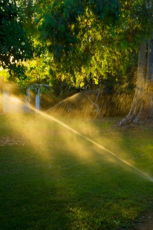 Watering the grass in park on sunset photo