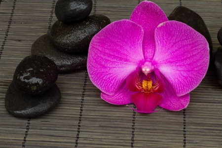 zen stones and orchid isolated on white background photo