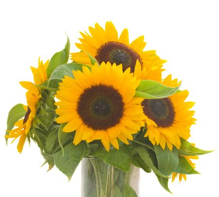 beautiful  sunflowers bouquet  isolated on white background photo