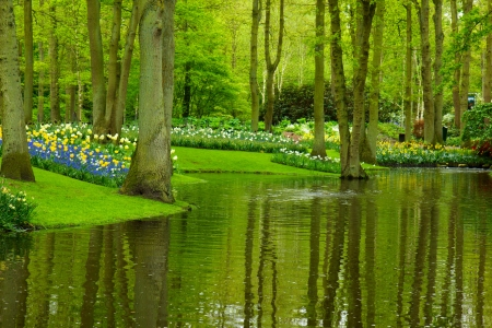 Colorful river and flowerbed  in dutch garden  Keukenhof , Holland photo