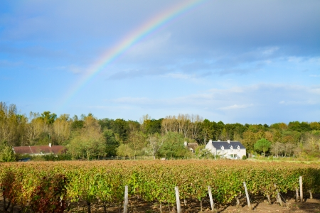 winery garden in autumn  after rain with beautiful rainbow photo