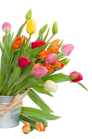 čerstvé tulipány v kovovém hrnci izolovaných na bílém pozadí