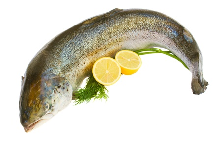 Atlantic Salmon Salmo solar whole isolated on a white studio background  Stock Photo - 16813599