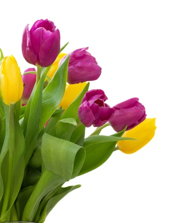 stalk flowers: set of tulips yellow and violet  isolated on white background