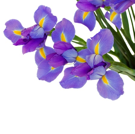 bouquet of irises photo