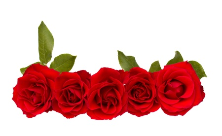 border of red  roses photo