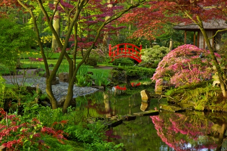 Japanese garden in spring photo