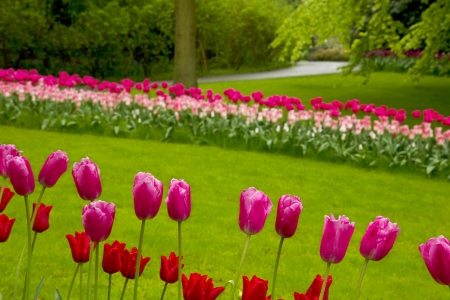 flowerbeds: colorful flowerbeds with grass Stock Photo