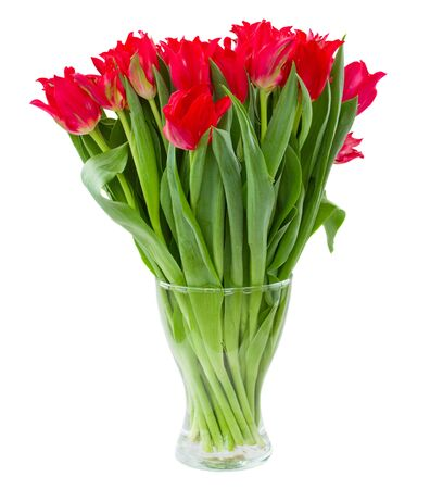 stalk flowers: fresh spring red tulips in vase isolated on white background