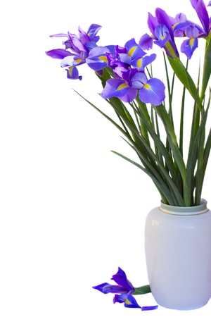 bouquet of irises flowers in vase  isolated on white background photo