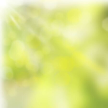 spring green leaves  bokeh background with sun beams photo