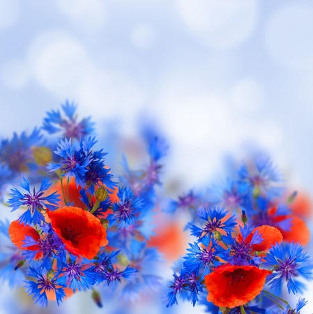 summer field flowers poppy and cornflower on blue sky bokeh background photo