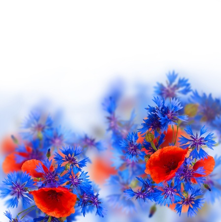 red poppy and  blue corn flowers on white background photo