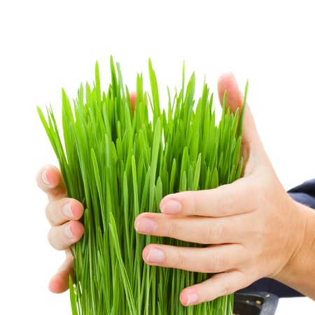 human hands holding grass isolated on white background photo
