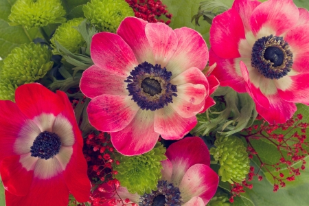 Vibrant and colorful red  anemone flowers close up photo