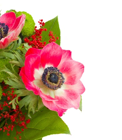 red anemone with green leaves isolated on white background photo