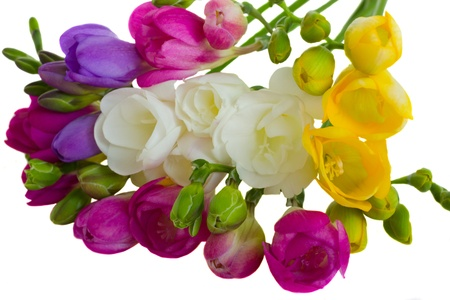 multicolored freesias brunch isolated on white background photo