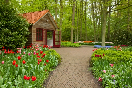 Colorful spring flowers in dutch  garden Keukenhof in Holland photo