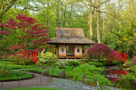 japanese maple: Japanese garden typical view, Den Haag, Holland Stock Photo