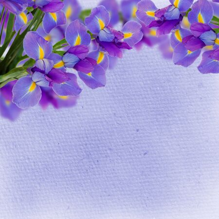 irises flower border on blue textured background photo