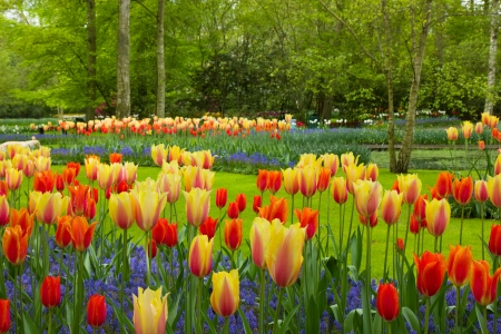 spring flowers in dutch spring garden Keukenhof in Netherlands photo