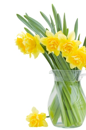bouquet of narcissus in vase isolated on white background photo