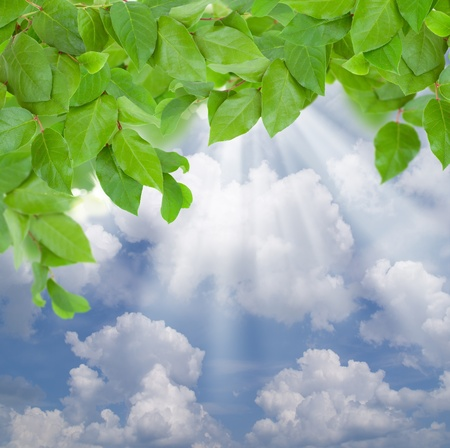 spring green leaves  on blue sky background with sun beams photo